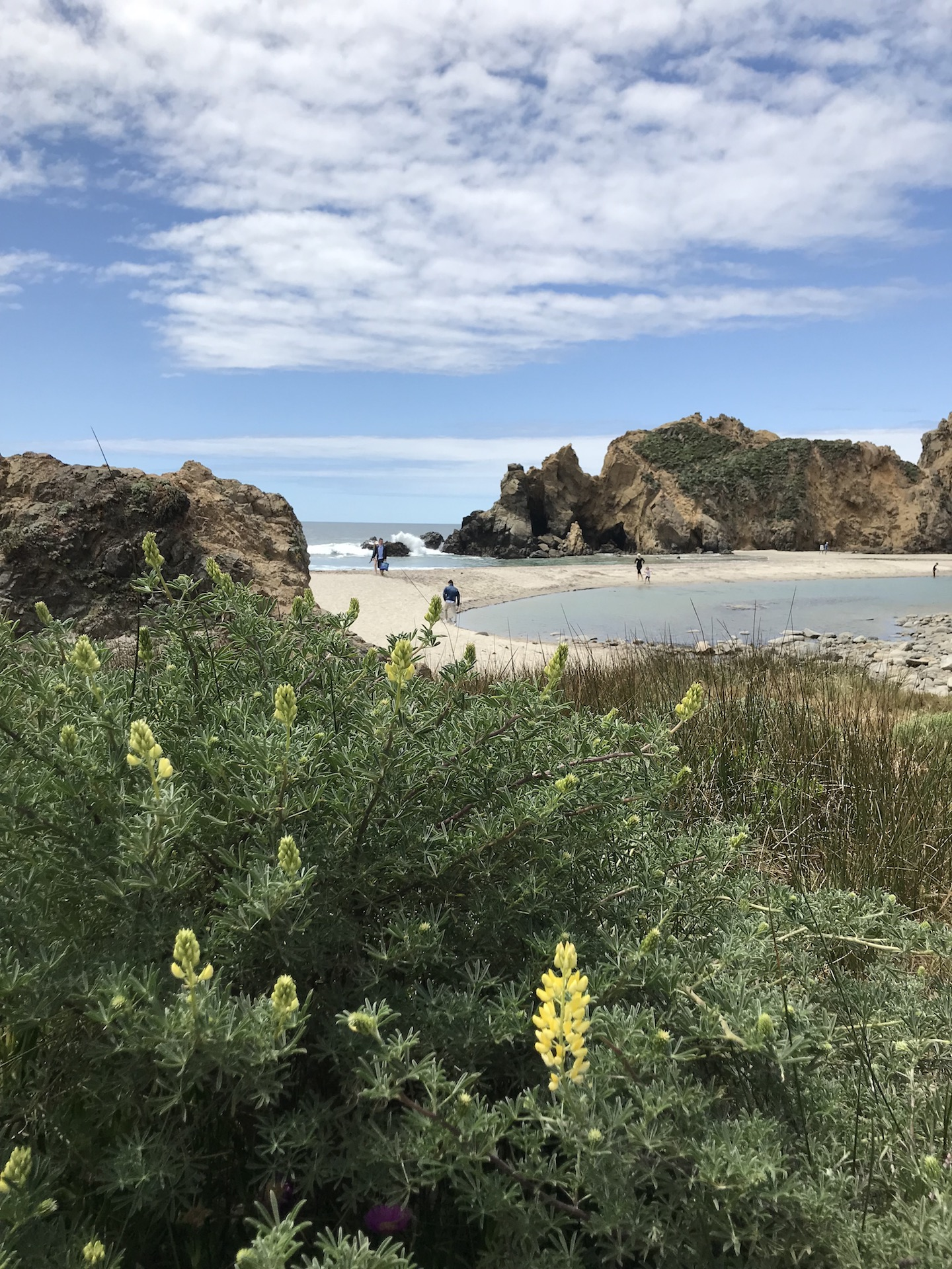 A photo of Pfeiffer beach and cove from the trail out